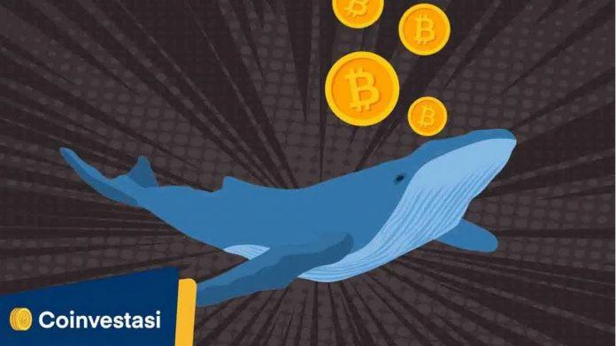 paus-bitcoin-tokocrypto