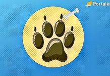 apa itu baby doge